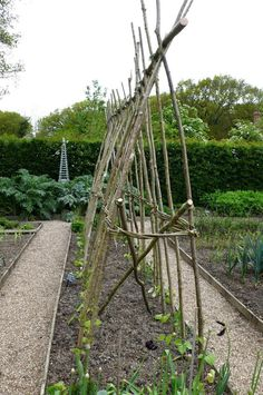 Runner bean poles made from hazel. Willow plaited around the center strengthens the structure.