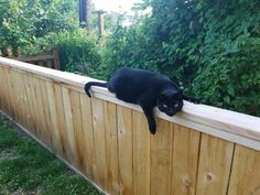 """This is the official Blog and Store for """"My Cats Are Stupid"""" Outdoor Furniture, Outdoor Decor, Stupid, Store, Cats, Blog, Home Decor, Gatos, Homemade Home Decor"""