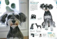 Schnauzer the Dog Grooming Hair Style Arrange Cute Japanese Book From Japan New