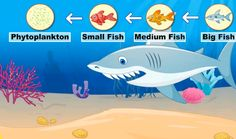 La cadena alimenticia Food chain http://www.turtlediary.com/kids-videos/food-chain.html