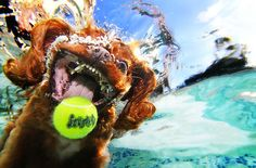 Under Water Dog photos -  Seth Casteel. See more from Seth here: http://www.littlefriendsphoto.com/