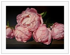 Amber Emm Artworks Available At Black Door Gallery. Photo realistic floral oil paintings with strong contrasting light, depicting the beauty that can be found in our own backyard. Black Doors, Amber, Gallery, Floral, Artwork, Painting, Beautiful, Art Work, Work Of Art