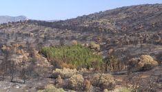 cypresses_Herbasana-Jerica-Spain_elpais