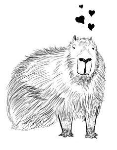 capybara love