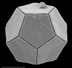 Electron microscope image of plankton : interestingasfuck
