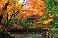 六義園 東京文京区にある日本庭園である。徳川5代将軍「綱吉」が側用人であった「柳沢吉保」に作らせたものである。  JR山手線駒込駅から歩いてすぐの門をくぐると、もうそこはここが都会の東京である事を忘れてしまい、そして鳥のさえずりや包み込まれるような森が出迎えてくれる。中ほどまで歩いて行くと、素晴らしい日本庭園が広がっている。庭園の中央にある池に映る青い空と紅葉したモミジなどを背景に写真を撮りたくなるだろう。園内にある「吹上茶屋」では抹茶や和菓子などを頂きながら、将軍の気分を味わってみるのも良い。 紅葉の季節には、紅葉がライトアップされ夜間も入園できる。昼間とはまた違った紅葉を楽しむことができる。散策で小腹が空いたら、園外にある「松月庵」でのお蕎麦もお勧めだ。お蕎麦も出汁も美味しいのだが、お店の方の粋な下町接客業にも感動するだろう。 住所   :東京都文京区本駒込六丁目 最寄り駅 :JR東京メトロ南北線「駒込」 都営地下鉄三田線「千石」 営業時間 :平常時—-9時~16時30分(閉園17時) #Tokyo #駒込 #神社 #Nature