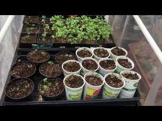 The Hobby Farm/ Starter Plants for Gardens