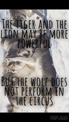The tiger and the lion may be more powerful, but the wolf does not perform in the circus. ~Sayings  #power #powerful #perform #circus #attitude #quotes