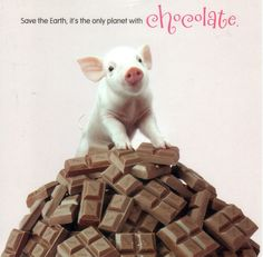 Two of my favorites - Pigs & Chocolate!