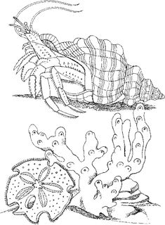 Sea Animals Coloring Pages | Free Sea Life Animals Coloring Pages