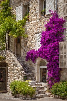 La couleur des fleurs de cette maison à Saint-Paul-de-Vence est absolument incroyable!