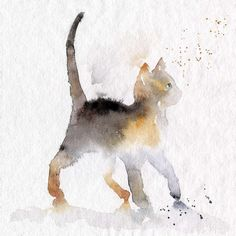 Alley Kitty Cat - Dancing In The Rain. - More on http://blule.fr/colourupyourday