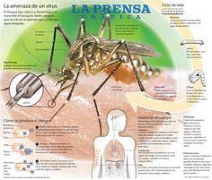 El zancudo y el dengue