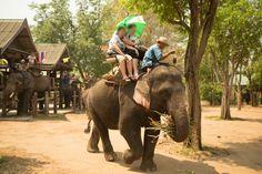 Thailand's Cruel Captive Elephant Industry