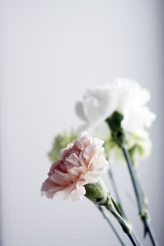 love the simplicity & vintage feel of carnations