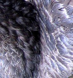Feather Study Feather, Study, Texture, Crystals, Photos, Image, Surface Finish, Quill, Studio