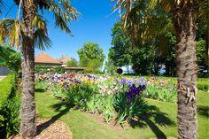 Palmiers, Golf Courses, Sidewalk, Plants, Gardens, Rose Bush, Potager Garden, Peony, Shrub