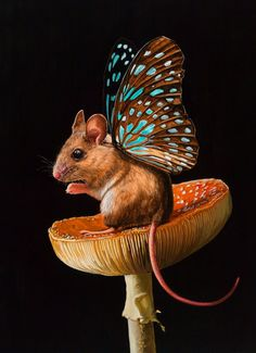 Artist Lisa Ericson suspends reality to combine adorable mice with ephemeral butterfly wings.