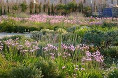 18-plantas-cubresuelos-con-flor-17