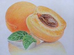 Original Colored pencil drawing,still life painting,apricots on Etsy, $65.00