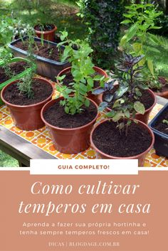 Eco Garden, Garden Crafts, House Plants Decor, Plant Decor, Gardening For Beginners, Gardening Tips, Vegetable Garden Planning, Growing Herbs, Plant Care
