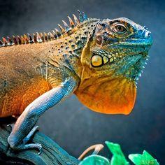 Big Bad Lizard