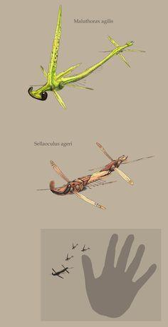 Maluthorax and Sellaoculus by Hyrotrioskjan.deviantart.com on @deviantART