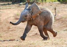 A very happy baby elephant - Pixdaus