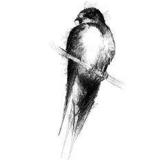 Fine Art Drawing, Art Drawings, Sketch A Day, Shop Art, Swallow, Surface Design, Uk Shop, Giclee Print, How To Draw Hands