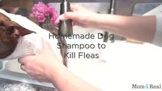 3 Ingredient Homemade Gnat Killer - Mom 4 Real
