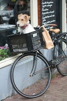 Black bike, white and tan pup