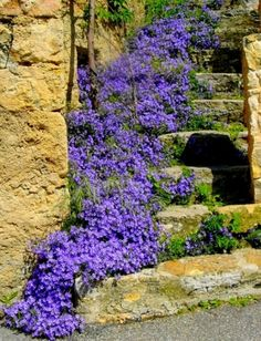 Cascading flowers against stone stairs