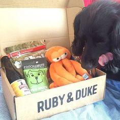 One of our many happy Ruby & Duke #Dukebox dog toy and treat customers.  #dogsofinstagram #dogstagram #dogs #dogsrule #doglove #doglovers #doglife #dogoftheday #doggy #doglover #doggie #dogscorner #dogofinstagram #dogsofinsta #dogwalk #dog_features #doggies #dogsandpals #dogloversofinstagram #dogdays #dogsofinstaworld #dogcrushdaily #dogslover