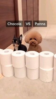 Super Cute Puppies, Cute Baby Dogs, Cute Funny Dogs, Super Cute Animals, Cute Little Animals, Cute Funny Animals, Cute Dogs And Puppies, Doggies, Adorable Puppies