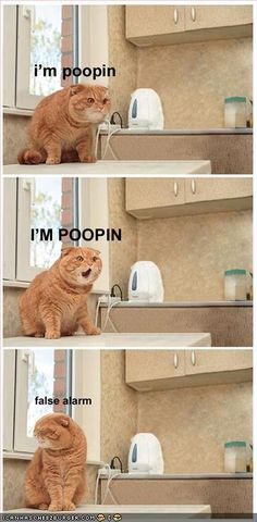 This slayed me the first time I saw it...tears were streaming down my face. Even now, more than a year later, it gets a chuckle. The cat's expression in the middle panel is just priceless.