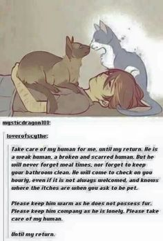 The best site to see, rate and share memes, gifs and funny pics! Animals And Pets, Funny Animals, Cute Animals, Crazy Cat Lady, Crazy Cats, Cassandra Calin, Rage Comic, All Meme, Cute Stories