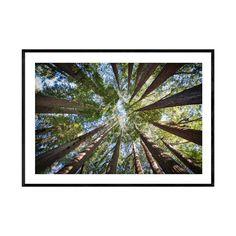 Large Wall Prints, Coastal Wall Art, Beach Print, Tree Print, Abstract Wall Art, Prints For Sale, Framed Art, Digital Prints, Nature Photography