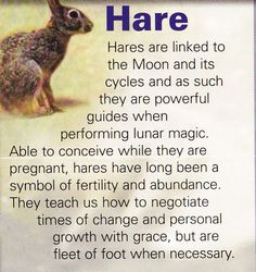 Hare = abundance, fertility, feminine energy, cycle of life (seasons), power, be ready to move fast.