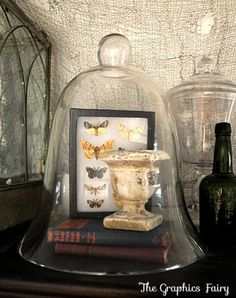 DIY Moth Specimen Shadow Box. I've been looking for a project to use Karen's moth printables for quite some time now.