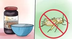 How to Get Rid of Earwigs. Earwigs, or pincher bugs, can be a nuisance but it is possible to get rid of them. These bugs are relatively harmless, but they will feast on plant leaves and decaying wood, causing damage. Earwigs thrive in damp. Get Rid Of Lizards, Get Rid Of Wasps, How To Get Rid Of Gnats, Bees And Wasps, Getting Rid Of Earwigs, Getting Rid Of Moths, Bug Control, Pest Control, Geckos