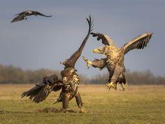 """""""Parks & Wildlife"""" Historia i Zdjęcia - National Geographic strzału"""