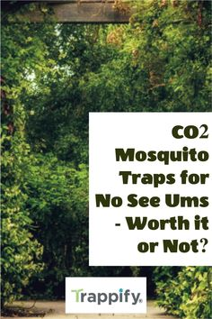 For an effective attack against mosquitoes, check out CO2 mosquito traps. These devices emit attractants that draw mosquitoes in and kill them. The question is: do CO2 mosquito traps for no see ums work? Indoor Vegetable Gardening, Organic Gardening Tips, Mosquito Trap, Mosquitoes, Hanging Plants, House Plants, Habitats, Patio, Draw