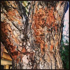 #ağaçgövdesuret