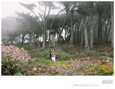 San Francisco Engagement photos, Land's End | UMeUsStudios.com