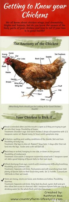 Good chart for diagnosing chicken ills.