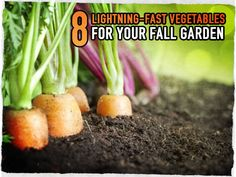 8 Lightning-Fast Vegetables For Your Fall Garden - these easy to grow veggies love the cool fall weather, do well in partial shade, and taste awesome. Veg Garden, Garden Pests, Edible Garden, Lawn And Garden, Vegetable Gardening, Vegetables Garden, Winter Vegetables, Growing Vegetables, Growing Plants