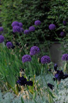 Tips på blommor från Viktoria Skoglund