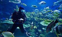 Diving in Mauritius Island!
