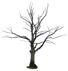 dead tree png by gd08 on deviantART