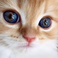 20 Closeups Of Cats With Beautiful Eyes - Süße tiere - Cats Cute Cats And Kittens, Baby Cats, I Love Cats, Kittens Cutest, Pretty Cats, Beautiful Cats, Animals Beautiful, Cute Baby Animals, Funny Animals